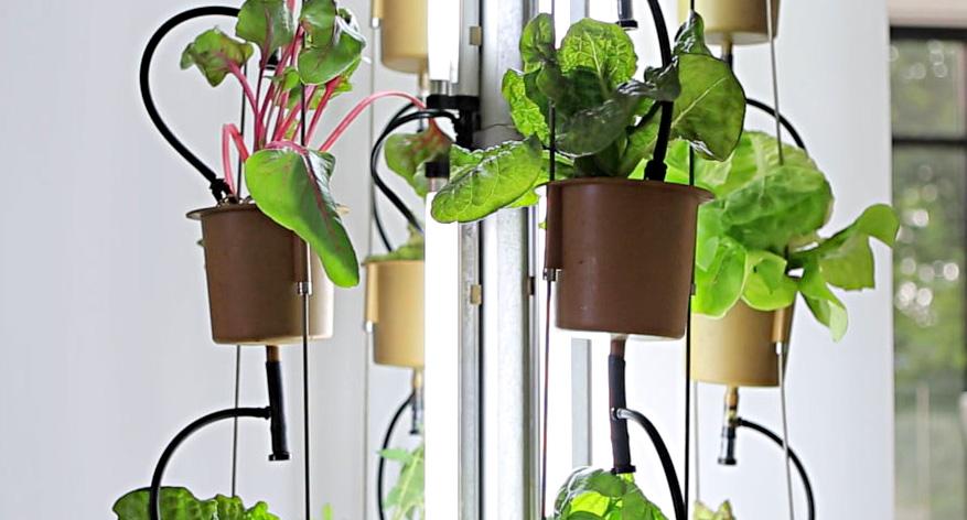 NutriTower, jardinage intérieur