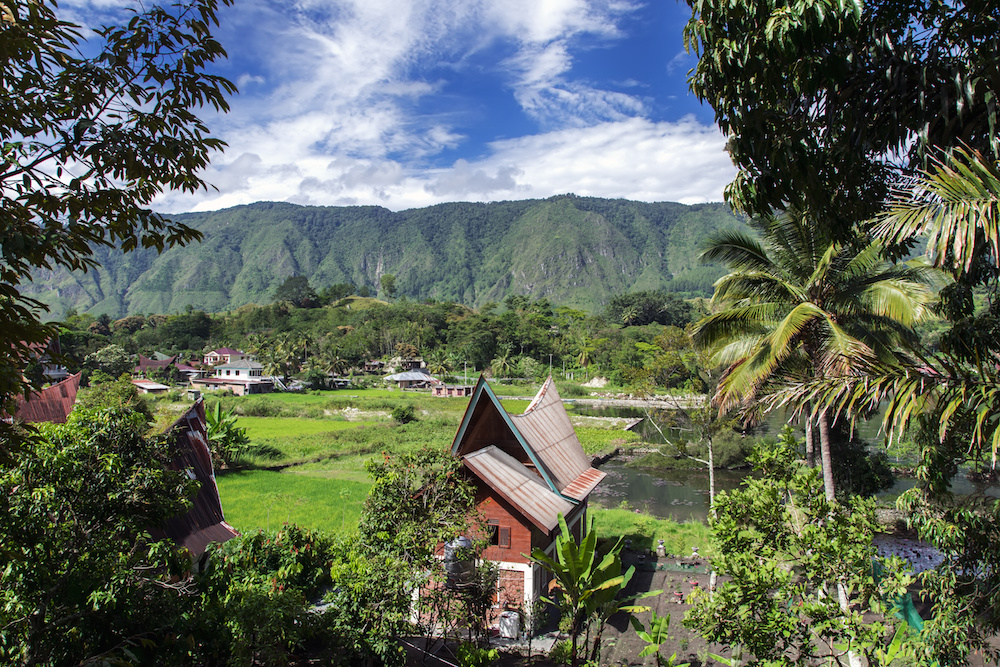 indonésie, sumatra, producteur, thé, pays