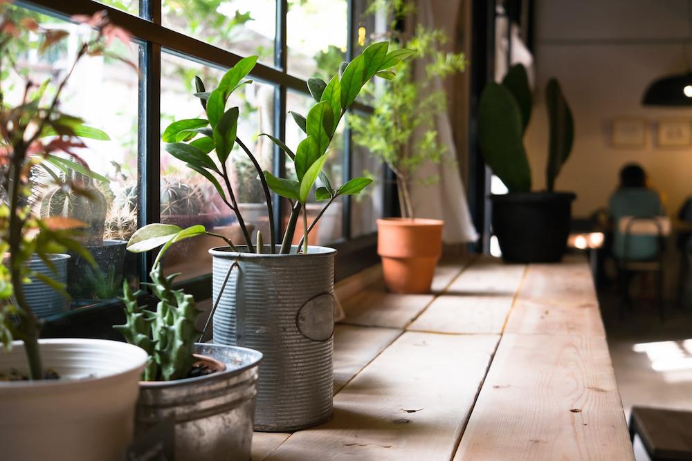 Jardin intérieur, truc pour démarrer, jardin, jardinage d'intérieur