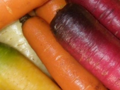 Carotte en mélange, biologique, semence