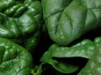 Épinard Bloomsdale, biologique, semence