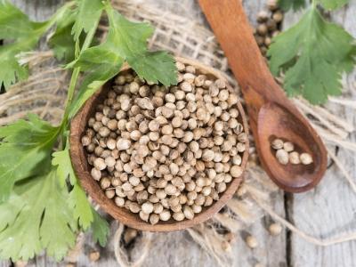 graine de coriandre, coriandre, fines herbes
