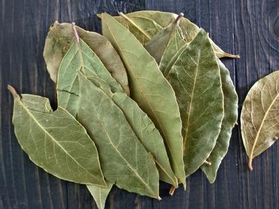feuilles de laurier, fines herbes