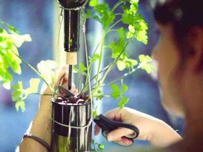 Jardin en bouteille, jardinage intérieur, Biocité