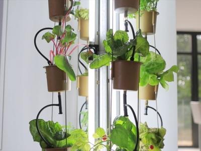 Nutritower, jardinage intérieur, windows farm, fenêtre maraîchère