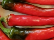 Piment cayenne Ring of Fire biologique