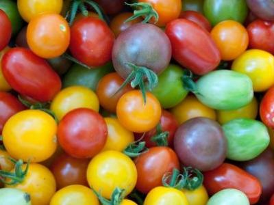 Tomate cerise, mélange à petits fruits, biologique, semence