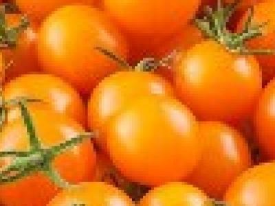 Tomate cerise, Sungold, biologique, semence