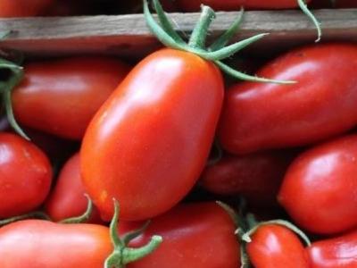 Tomate italienne San Marzano, biologique, semence