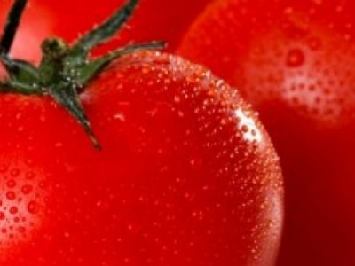 Tomate standard Moskovich, biologique, semence